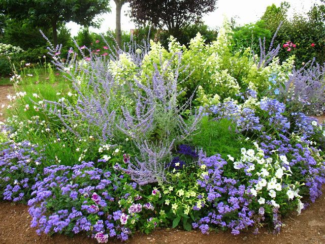 17 best images about plant combos on pinterest gardens. Black Bedroom Furniture Sets. Home Design Ideas