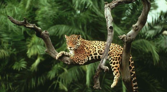 Amazzonia: ritorno alle origini - per stare bene, per turismo, per arte, per sport, per stare insieme, per vivere meglio