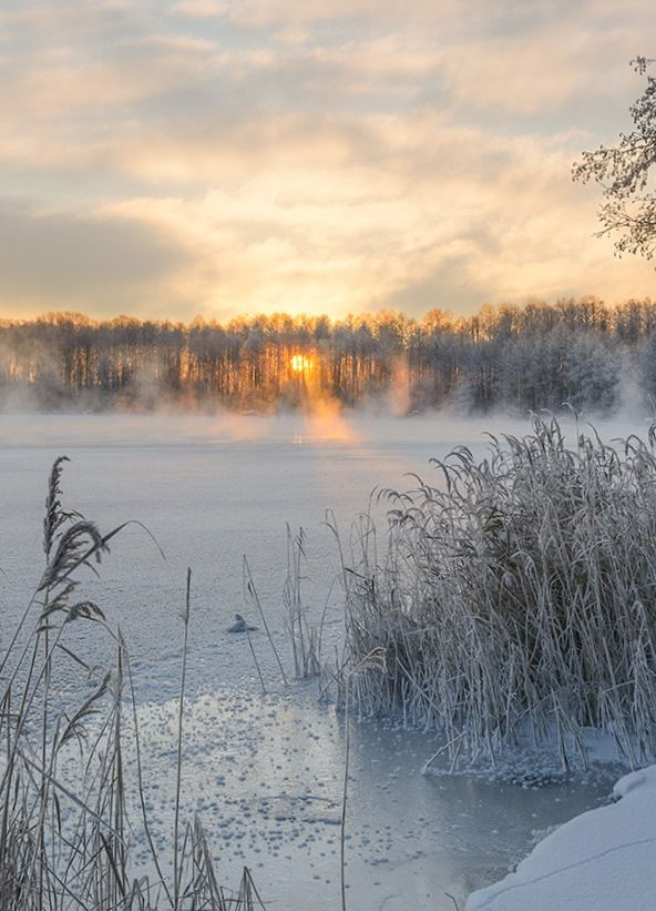 Mist Morning Sunrise Sunset Snow River Nature Winter Forest Winter Photography Winter Forest Snow Photography
