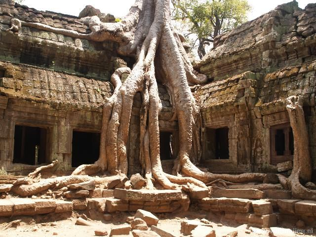 Rondreis Indochina - Ta Phrom tempel - De boomwortels hebben greep op de Ta Phrom tempel (copyright : Ronald van der Veer (http://www.veeronline.nl))
