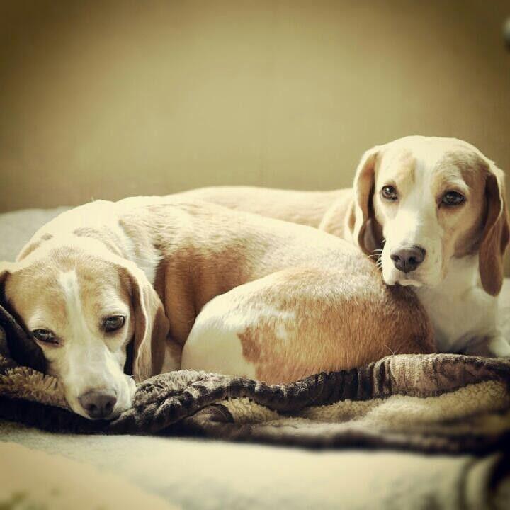 Beagle Nano Pico