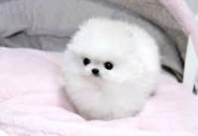 Cute little puff ball