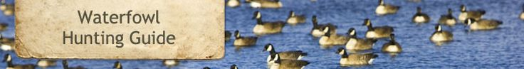 Montana Fish, Wildlife & Parks :: Waterfowl Hunting Guide