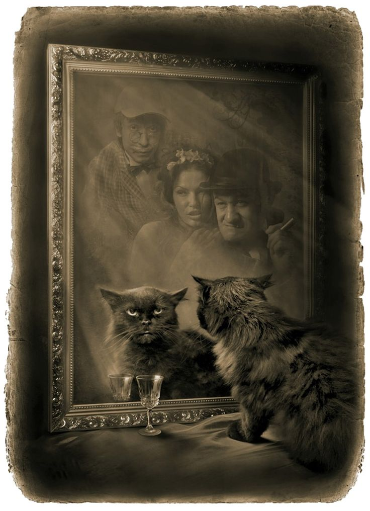 Кот Бегемот перед зеркалом