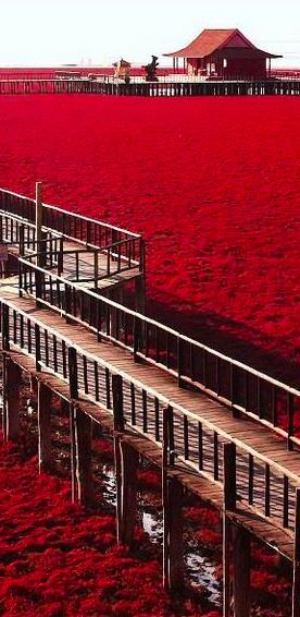 Playa roja en Panjim, China.