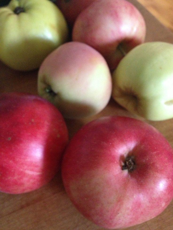 Omena päivässä.