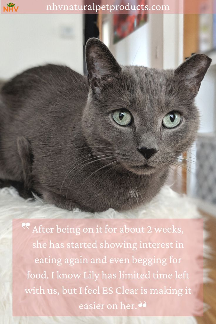 Cat Mom Marina Updated On How Her Kitty Lily Has Been Doing Since Starting Es Clear She Has Been Impressed With How Lily In 2020 Cat Mom Cancer Support Animal Stories