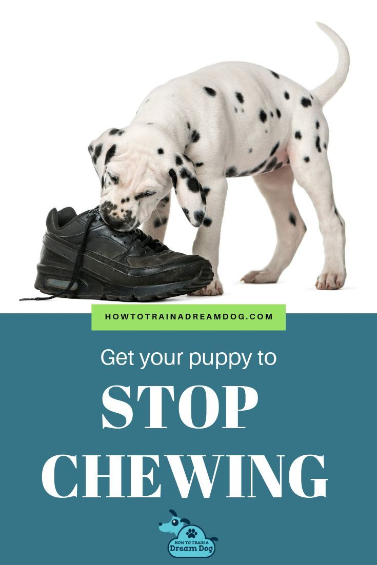 How To Stop Your Puppy S Chewing In 2020 Hondentraining