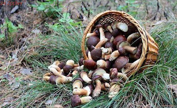 Mobilní aplikace rozpozná druh houby i v hlubokém lese, není ale stoprocentní