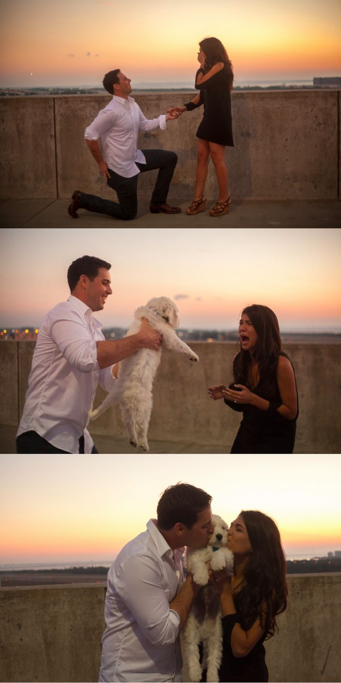This surprise marriage proposal included an engagement ring and  the cutest puppy!