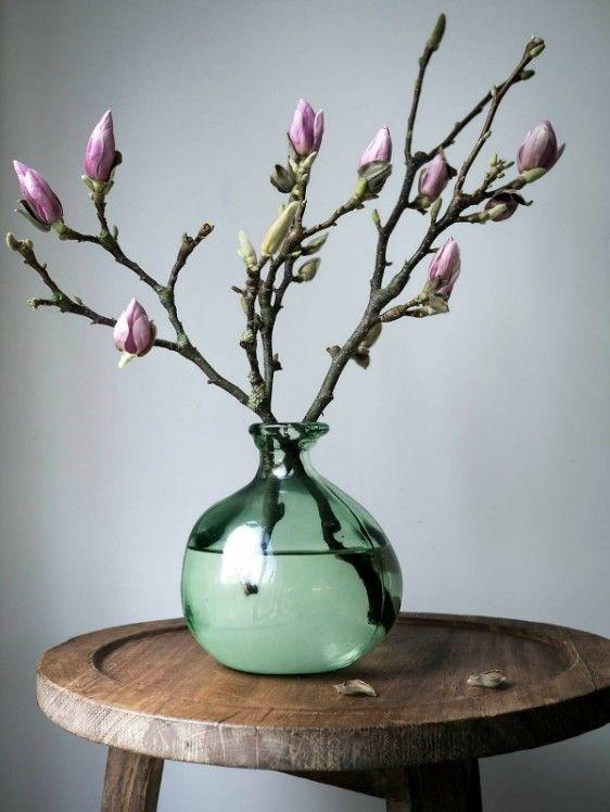 Magnolia Takken In Vaas – Potplanten Buiten Schaduw Magnolia Takken Kopen 2018