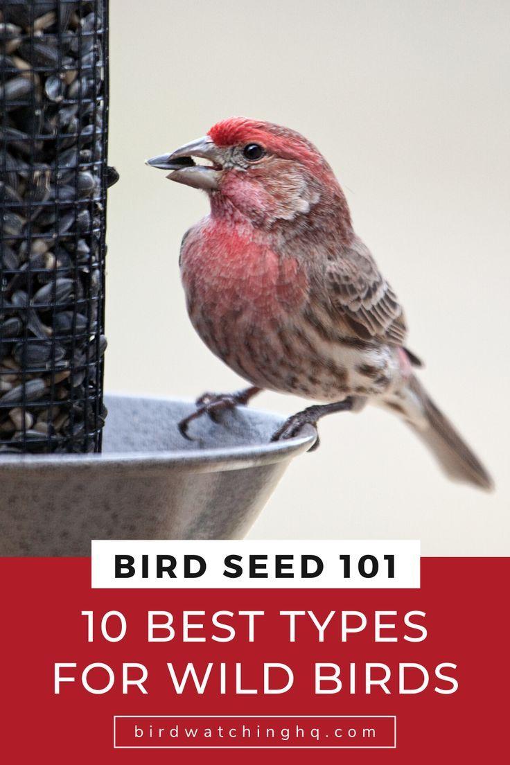 Bird Seed 101: The 10 Best Types For Wild Birds | Birds ...