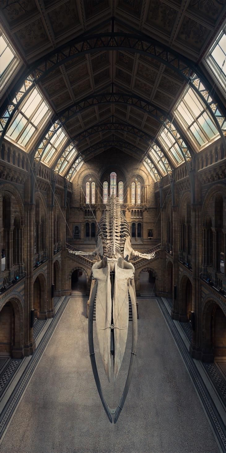 Image result for Museum Photography Tips