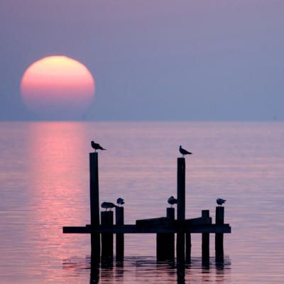 birds on posts at sunset: Pink Summer, Pink Sunsets, Martin, The Ocean, Beaches Resorts, Holidays Gifts, Beautiful Sunsets, Coastal Living, The Sea