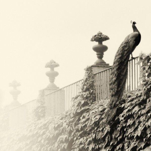 3wings:  Three Pinnacles, Parc del Laberint, Barcelona, Spain, 2002. Pt/Pd print Albarran Cabrera