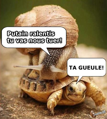 site drole image humour france images memes pictures gag blagues funny website conneries qc insolites rire lol photo a partager sur facebook animaux comique