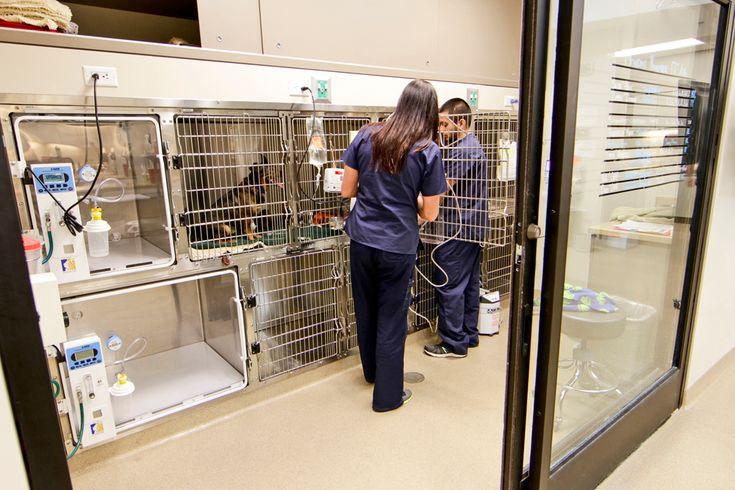 18+ Oak valley animal hospital ideas