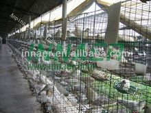 Pigeon Cage, Pigeon Cage direct from Anping County Innaer Wire Mesh Manufacturing Co., Ltd. in China (Mainland)