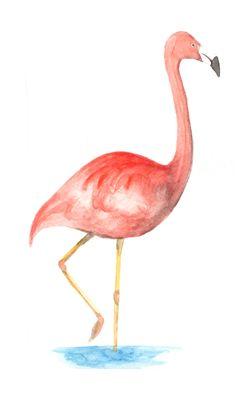 Ilustración de Marcelo Leyton Flamenco www.cotorra.cl