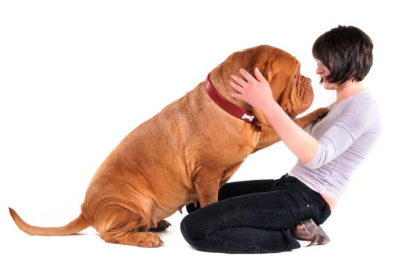 Is your puppy or kitty starting look a little more full figured? Mine, too.   Check out petmd's read on what this means to us and them...