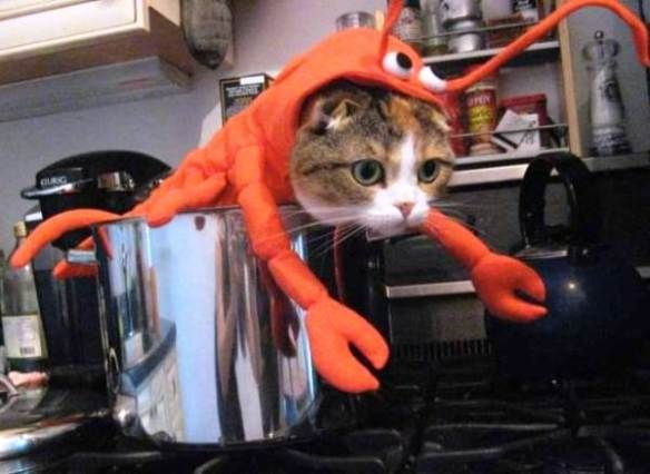 15 hilarious cats in costumes - lobster cat