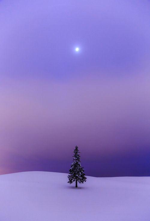 Lavander - purple art sunset over a lone tree in the snow.