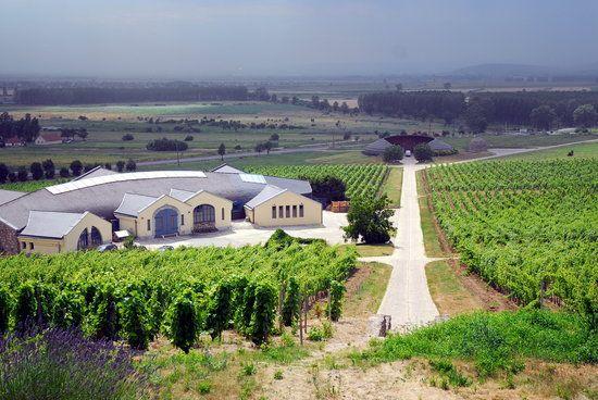 **Tokaj Wine Region - Tokaj, Hungary