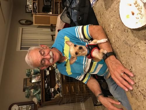 Crestview FL - Meet Rocky, an adoptable Chihuahua looking for a forever home;  LOCATED at My Safe Place Pet Rescue, Crestview FL
