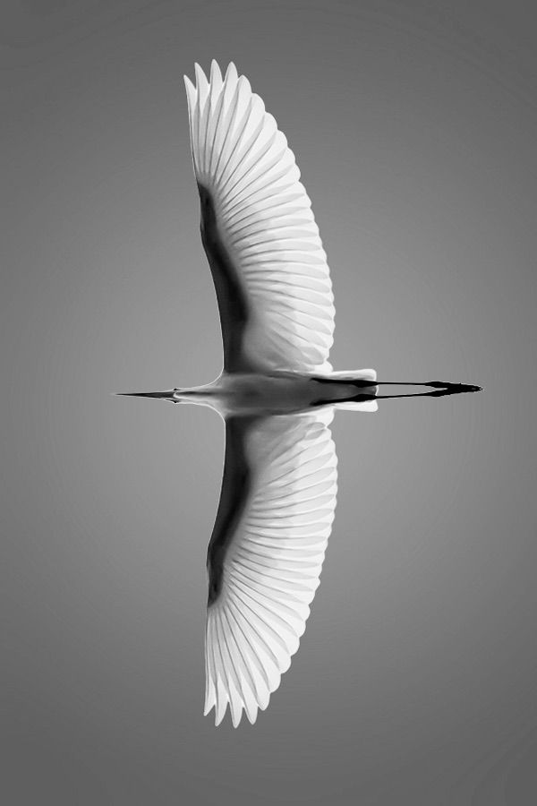 Heron in Flight.. .                                                                                                                                                                                 Mehr