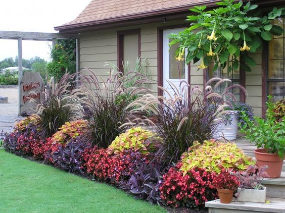 Beautiful, colorful landscaping! The tall grass is purple fountain grass (Pennisteum sectaceum 'Rubrum'), available from bustaniplantfarm.com (image credit). Looks like coleus and purple heart, and maybe begonias?: