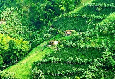 Paisaje Cultural del Café de Colombia, Patrimonio Mundial de La Unesco
