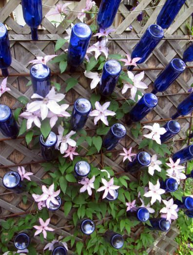 trellis of lattice, clematis and blue bottles