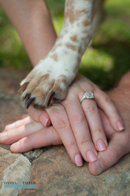 Engagement announcements photo 38