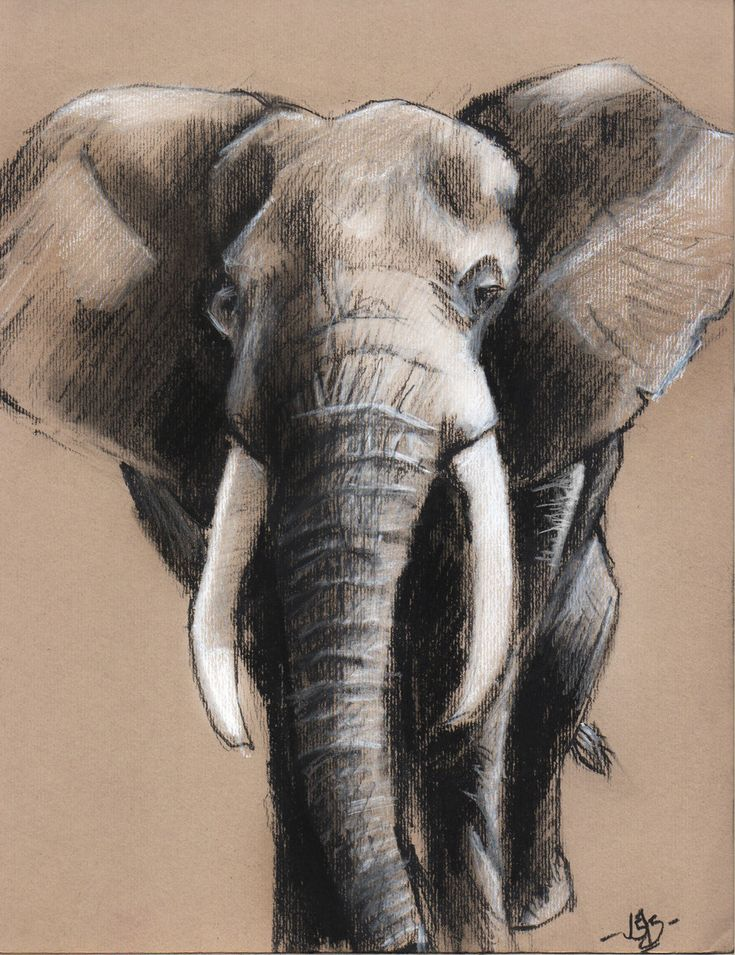 Elephant Charcoal drawing on toned paper by JosueDraftArt