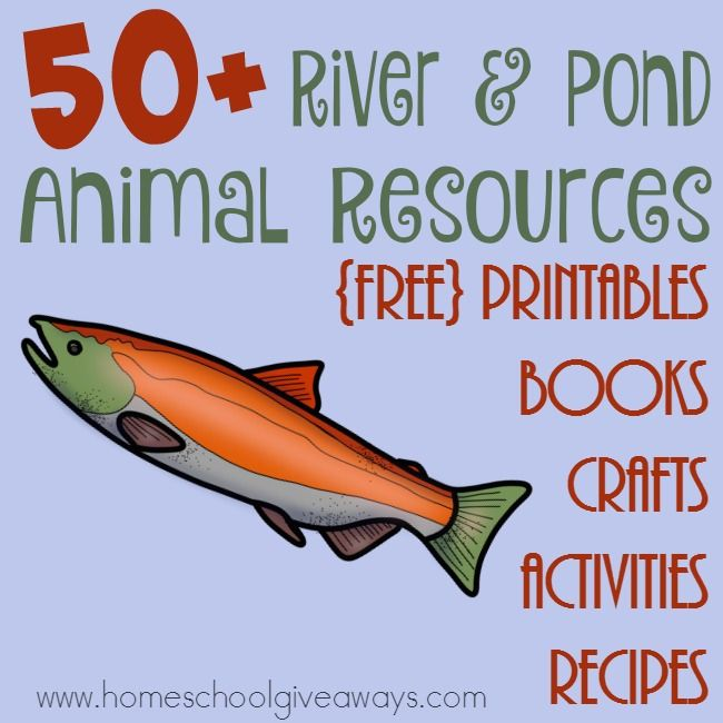 FREE Resources to Learn About Rivers & Pond Animals   Free Homeschool Deals ©