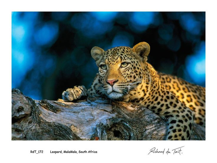 Richard du Toit | COLOURS of AFRICA