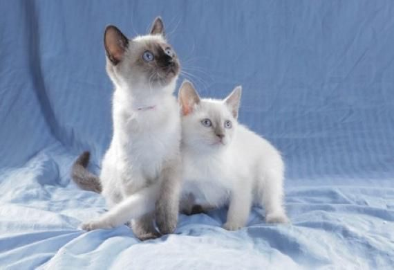 Cat Birthing Basics - Delivering Kittens Safely | petMD