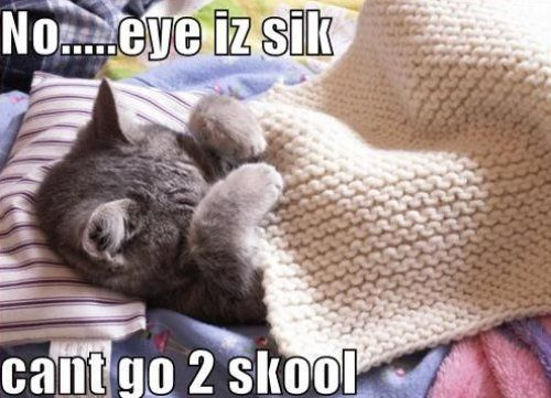 Daily Awww: Funny captions make cute photos better (27 photos) – theBERRY