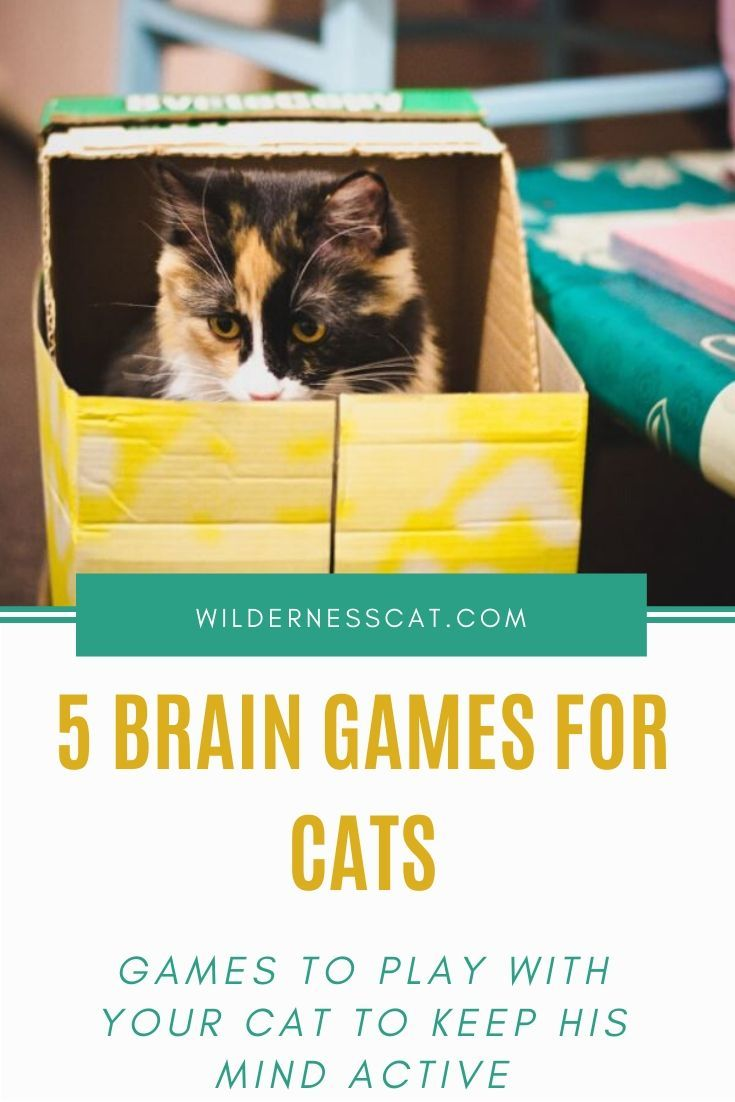Brain Games For Cats 5 Stimulating Games You Can Play With Your Cat Kitty Games Brain Games Cats