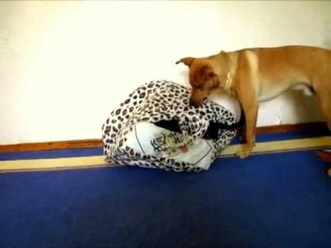 Funny Dogs Bulka & Kostik. Small dog house