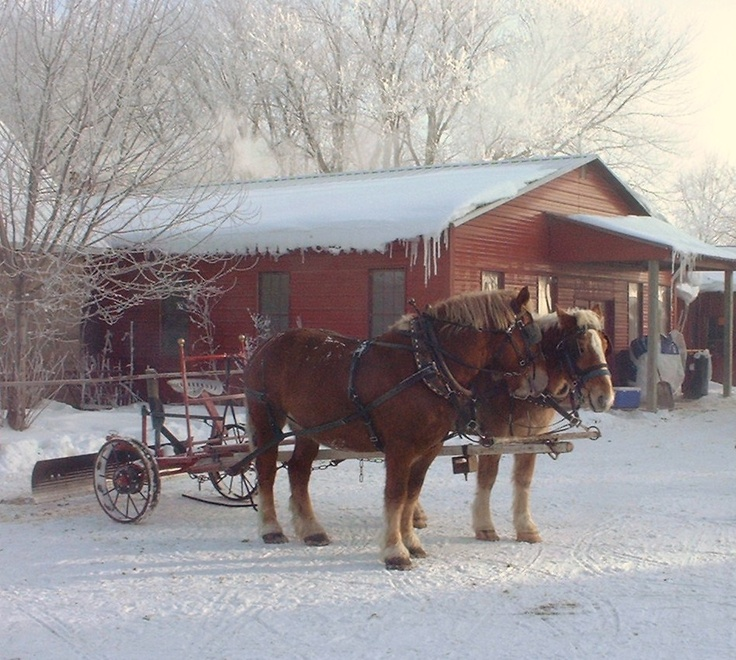 Amish Snow Plow Near Harmony Mn Minnesota Nice