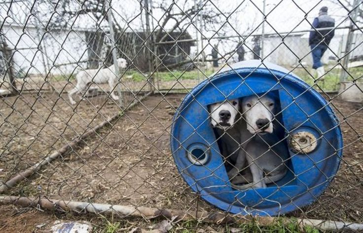 60 Dogs Rescued from Hog-Dog Fighting Ring in Alabama - Orvis News