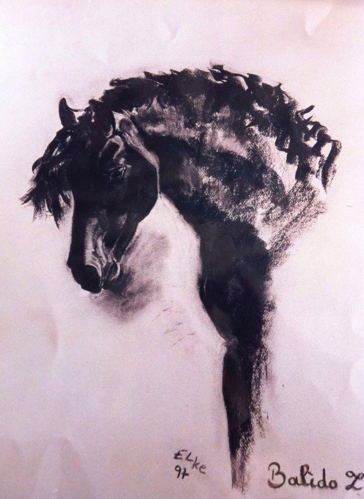 Cap de cavall en carbó / Cabeza de caballo en carbon / Horse head drawing / Paardehoofd in grafiet
