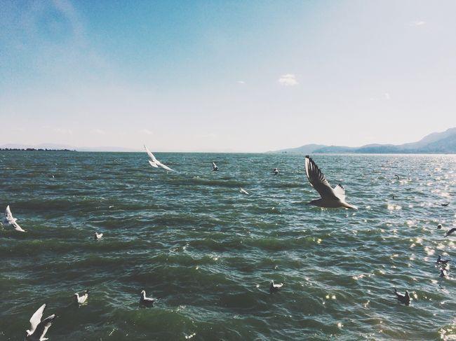 Seagulls VSCO OpenEdit Hello World 一直往南方飞不会太久