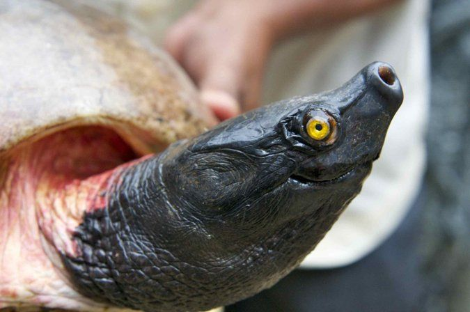 WCS pledges to protect endangered freshwater turtles and tortoises
