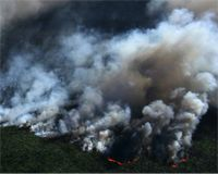 August 25, 2017 today's action Help halt slash and burn palm-oil production in Indonesia