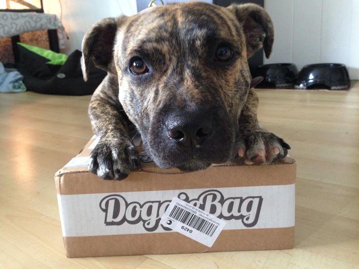 Thorkil - DoggieBag.no #DoggieBag #Hund