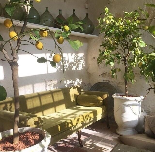 𝙿𝚒𝚗𝚝𝚎𝚛𝚎𝚜𝚝 𝚒𝚗𝚕𝚘𝚟𝚎𝚖𝚊𝚣𝚎 decor aesthetic rooms home on sweet dreams for your home plants decoration precautions and options id=75986