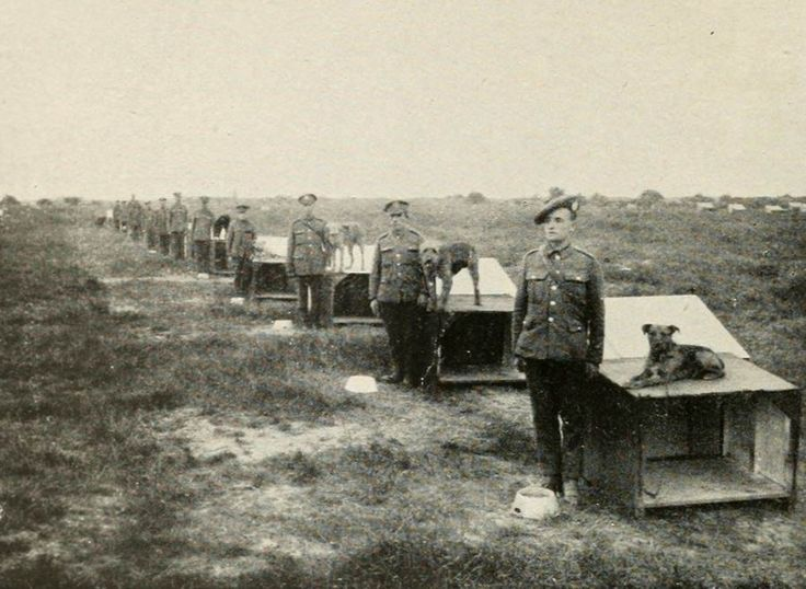 Type of kennel used for British war dogs Airedale Terrier, during the Great War.