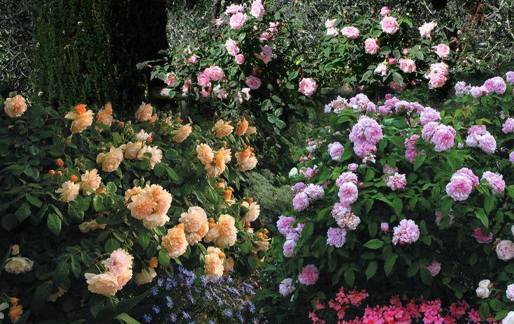 Le Rose di Piedimonte